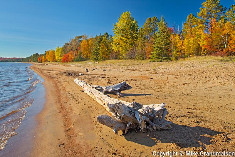 Driftwood on sandy beack along Lake Superior in autumn. Pancake Bay<br />Pancake Bay Provincial Park<br />Ontario<br />Canada