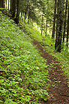 Idaho, North, St. Joe National Forest, Avery. Malin Ridge Trail # 197, is a 7 mile hike through coniferous forests.
