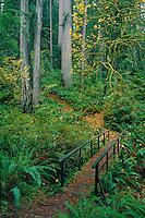 Junction Miner's Ridge<br />   and Godwood Creek Trails<br /> Prairie Creek  Redwoods State Park<br /> Humboldt County,  California