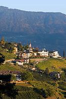 Italien, Suedtirol, bei Meran, Dorf Tirol: umgeben von Weinbergen   Italy, South Tyrol, Alto Adige, near Merano, Tirolo: surrounded by vineyards