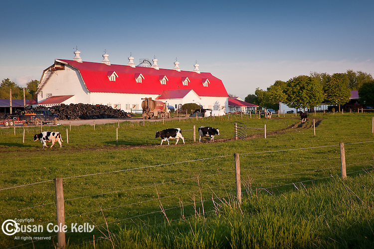 A Champlain Valley dairy farm in Charlotte, VT, USA