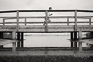 Image Ref: M199<br /> Location: Cherry Lake, Altona<br /> Date: 09 Nov 2014