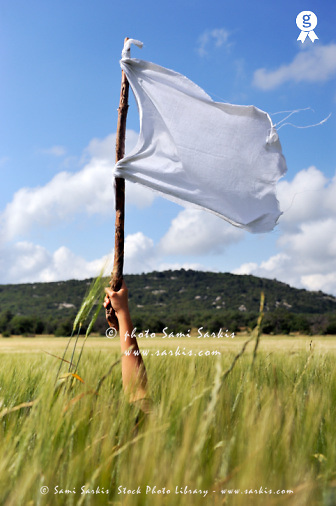 Woman's arm holding a white flag in wheat field (Licence this image exclusively with Getty: http://www.gettyimages.com/detail/89938104 )