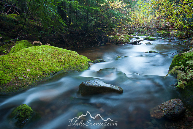 Idaho, North, Kootenai County, Coeur d'Alene National Forest. Beauty Creek  with mossy boulders.