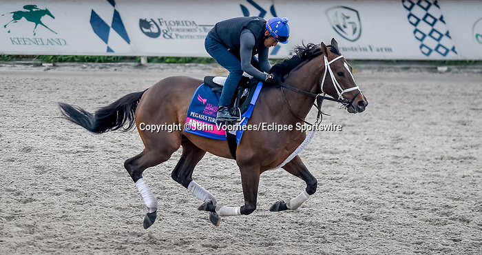 January 23, 2020: Arklow gallops on the main track as horses prepare for the Pegasus World Cup Invitational at Gulfstream Park Race Track in Hallandale Beach, Florida. John Voorhees/Eclipse Sportswire/CSM