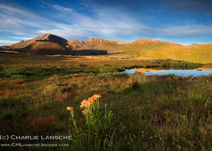 Independence Pass, Sawatch Mountains, Colorado