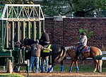 LOUISVILLE, KENTUCKY - APRIL 29: Game Winner, trained by Bob Baffert, schools at the starting gate at Churchill Downs in Louisville, Kentucky on April 29, 2019. Scott Serio/Eclipse Sportswire/CSM