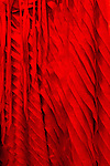 Red Silk 03 - Detail of layered red silk dress.