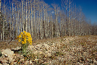 Photo of an autum dirt road with one bright spot of yellow blooms.