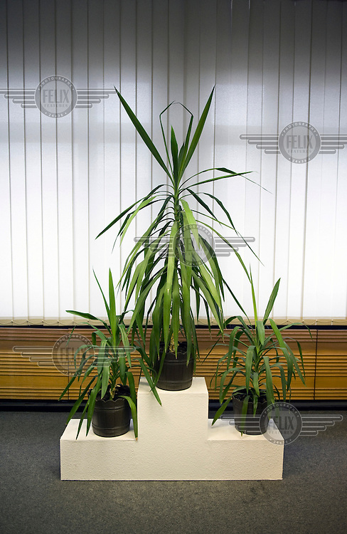 Plants in the office complex of Erich Mielke, former Minister for State Security, inside the documentation centre at the headquarters of former East Germany's (GDR) secret police, the Stasi (also known as the Ministry for State Security, the MfS).