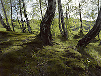 FOREST_LOCATION_90017