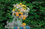Carl, FLOWERS, photos, SWLA12025,#f# Blumen, Natur, flores, naturaleza