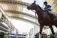 SHA TIN,HONG KONG-APRIL 28: Dicton,trained by , is schooling in preparation for  the Audemars Piguet QEII Cup at Sha Tin Racecourse on April 28,2017 in Sha Tin,New Territories,Hong Kong (Photo by Kaz Ishida/Eclipse Sportswire/Getty Images)