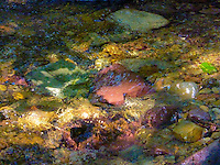 Colorful stones underwater with a green leaf floating. Kootenai River tributary Montana.