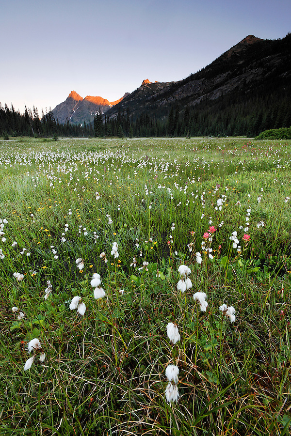 Meadow below sunrise on Whistler Mountain, Washington Pass, Hwy 20, Wenatchee National Forest, North Cascades, Washington