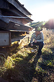 USA, Oregon, Willamette Valley, Clare Carver gathers chichen eggs at her farm, Big Table Farms Winery, Gaston