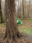 Leprechaun with a smoking pipe hiding behind a tree in a forest
