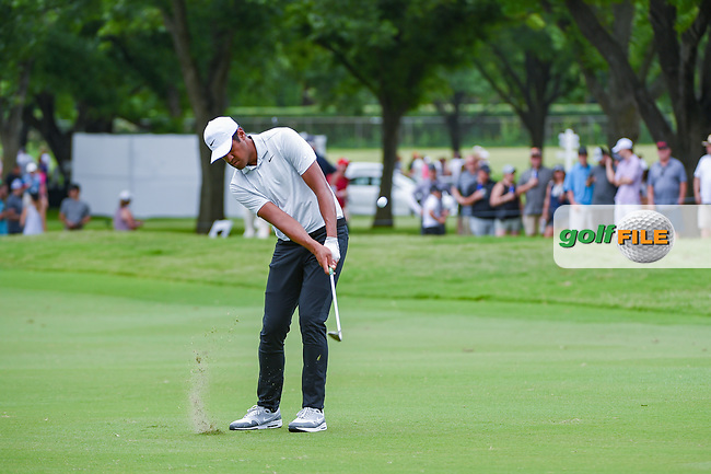 Tony Finau (USA) chips on to 2 during round 3 of the 2019 Charles Schwab Challenge, Colonial Country Club, Ft. Worth, Texas,  USA. 5/25/2019.<br /> Picture: Golffile | Ken Murray<br /> <br /> All photo usage must carry mandatory copyright credit (© Golffile | Ken Murray)