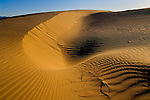 Wind blown patterns in sand dunes in morning light, North Algodones Dunes Wilderness, Imperial County, California