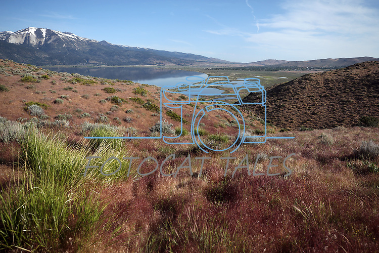 Images from Washoe Lake, north of Carson City, Nev. on Wednesday, June 7, 2017. <br /> Photo by Cathleen Allison/Nevada Photo Source