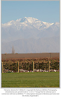 Vineyard in Mendoza and view over the Andes, Argentina.