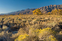 Sunrise in Owens Valley, California showing various desert plants.