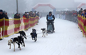 2nd February 2019, Thuringia, Frauenwald, Germany; Sled dog handler Dirk Juesch and his team are on their way during a sled dog race. 120 mushers from five nations with their huskies, samoyeds, malamutes or Greenland dogs started.