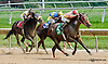 Holy Mo winning at Delaware Park on 9/5/13