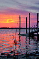 A beautiful red, yellow and purple sunset silhouettes a dock and lone pelecian on the Intra-Coastal waterway in St. Augustine, Florida.
