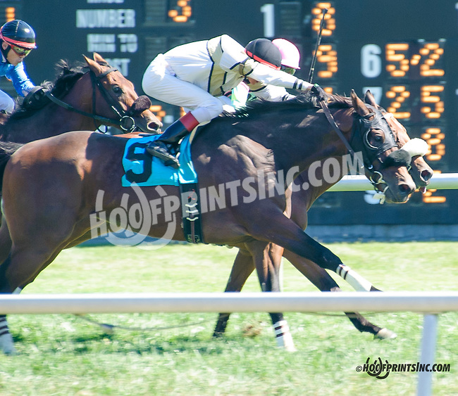 Daddy in the Dark winning at Delaware Park on 9/14/15