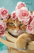 Interlitho, Alberto, ANIMALS, cats, photos, cat, flowers(KL15015/3,#A#)