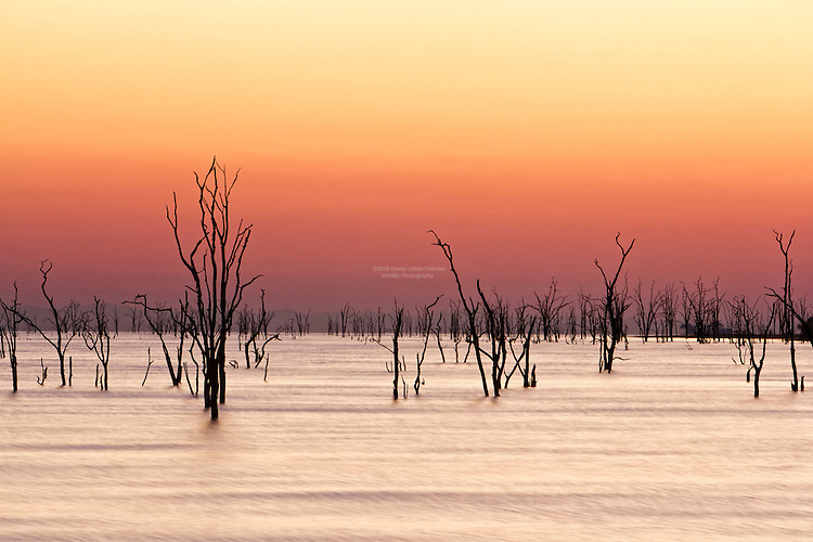 A wow dawn over Kariba and the Mopane trees left over from the original flooding in 1959. A dawn that has many hues, and every morning is different.