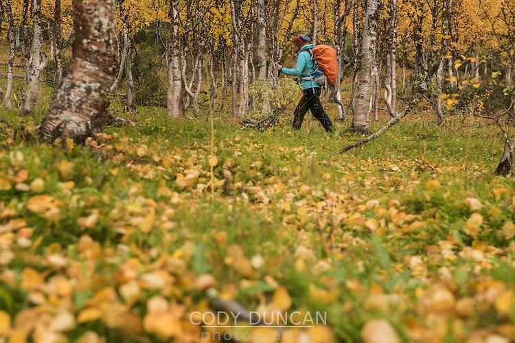 Female hiker hiking through autumn landscape near Tärnasjös hut, Kungsleden trail, Lapland, Sweden