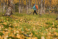 Female hiker hiking through autumn landscape near Tärnasjös hut, Kungsleden trail, Lapland, Sweden