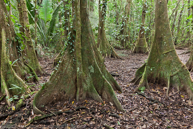 Hike through the Jungle, Belize