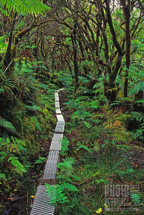 Kamakou Preserve rainforest, Molokai, Hawaii. 98% native species