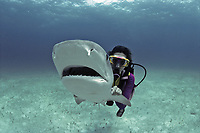 Scientsist revives and saves Tiger Shark (Galeocerdo cuvier) by forcing water across its gills, Bahamas - Caribbean Sea.