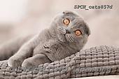 Xavier, ANIMALS, REALISTISCHE TIERE, ANIMALES REALISTICOS, cats, photos+++++,SPCHCATS857D,#a#