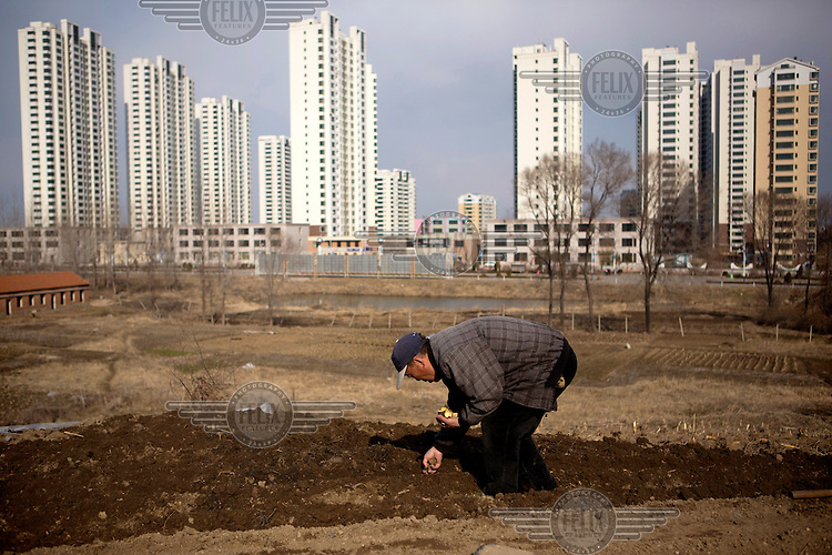 A man tends to his small vegetable plot that is in front of the new development of Xinchengqu. /Felix Features