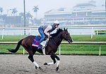January 23, 2020: Omaha Beach gallops as horses prepare for the Pegasus World Cup Invitational at Gulfstream Park Race Track in Hallandale Beach, Florida. Scott Serio/Eclipse Sportswire/CSM