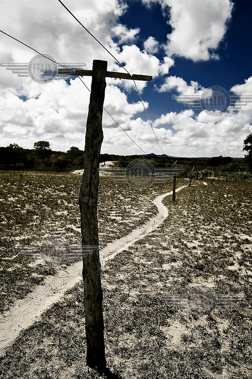 Electricity lines brings power to farmers houses in the Brazilian sertao (desert).