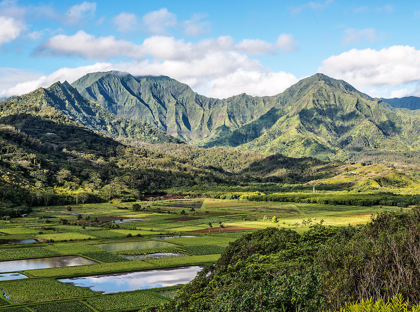An early morning shot of the Hanalei Valley, with its taro fields, on the north shore of Kauai, Hawaii