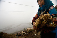An ethnic minority Hani woman holds gathered wood while walking along a dirt road outside Sheng Cun Village in rural Yuanyang County, Yunnan Province, China.