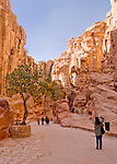 Tourists walk past a lone olive tree along the ancient trade road through the Siq, the path into the Nabatean capital at Petra, Jordan.  This ancient road, originally paved by the Nabateans and later renewed by the Romans,  passes for about 1.2 km through this natural stone valley.  Note that this is not a canyon carved by water, but a divide created by tectonic forces.  Note the matching rock grain on both sides of the path.  © Rick Collier