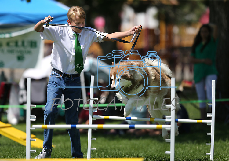 4-H member Tristin LaFever, of Reno, and his dog Tundra run the dog agility course at the Carson City Fair at Fuji Park on Tuesday, July 25, 2017. For more information about the fair, which run through Sunday, go to carsoncitynvfair.com.<br /> Photo by Cathleen Allison/Nevada Photo Source
