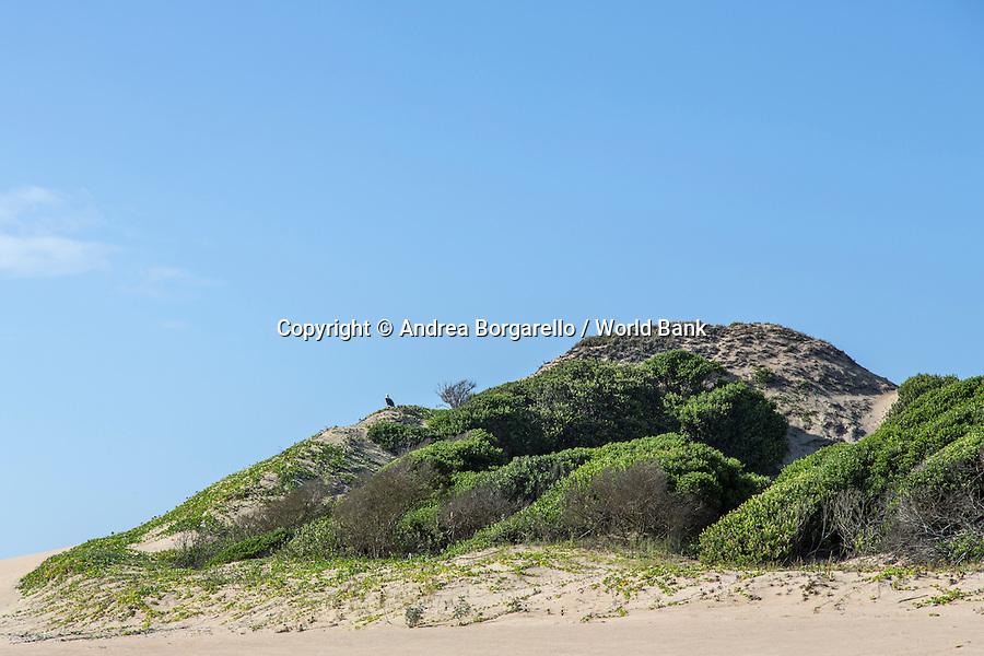 Marine Reserve of Ponta do Ouro.<br /> Maputo province, Mozambique.<br /> sea eagle