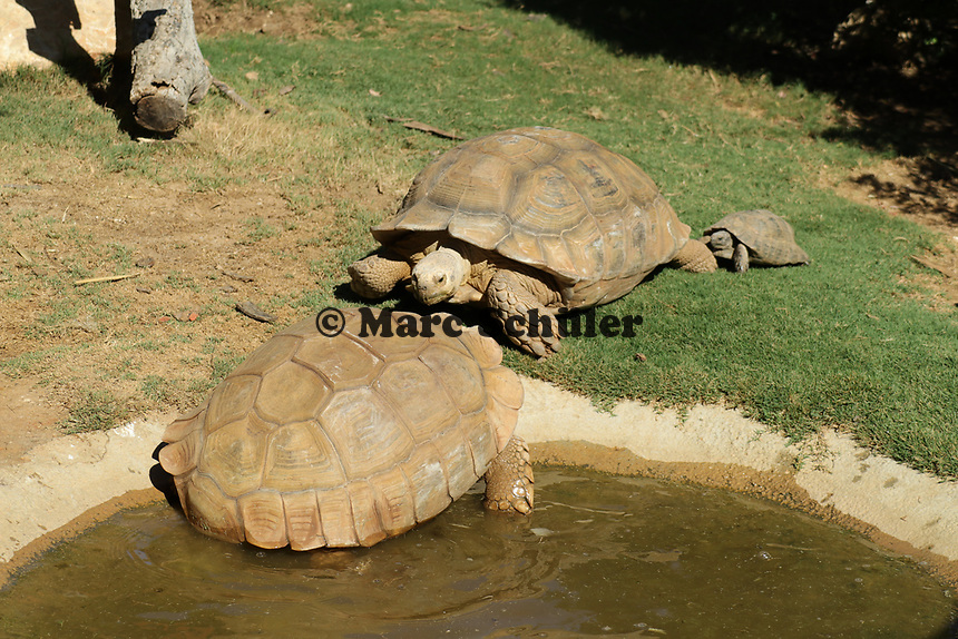 Schildkröten im Vergnügungspark Zoomarine - 25.09.2019: Zoomarine Park, Guia, Albufeira an der Algarve