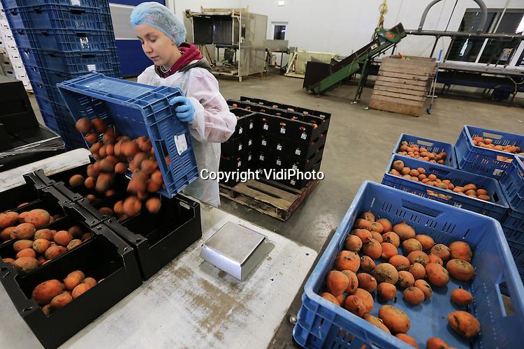 Foto: VidiPhoto<br /> <br /> ZEEWOLDE - Pools en Hongaars personeel aan het werk bij teeltbedrijf van biologische groenten, Bio Brass in Zeewolde. Bio Brass teelt en verwerkt op grote schaal (200 ha.) biologische groenten. Een groot deel van de producten is bestemd voor de export. In Nederland is onder andere Albert Heijn een grote klant.