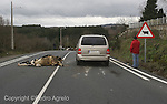 accidente. Atropello de una vaca