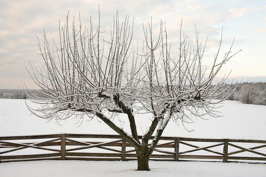 Snow covered farmland in Albemarle County, VA.